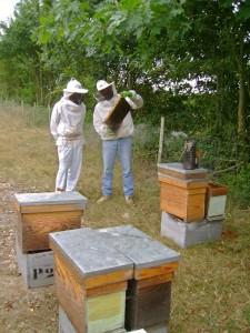 Alain Branchereau - L'Atelier du miel